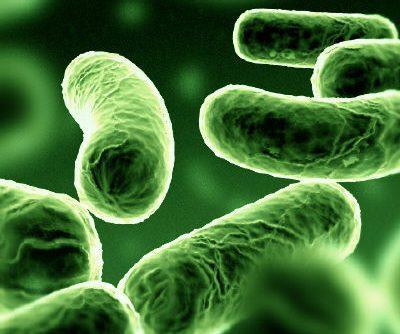 Vírus e Bactérias